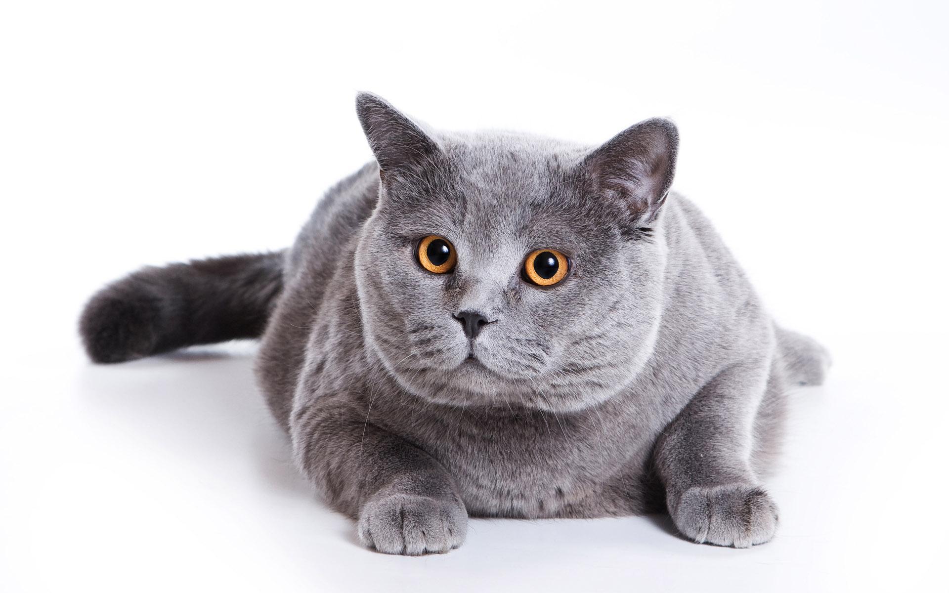 Название кошки размер 1920x1200