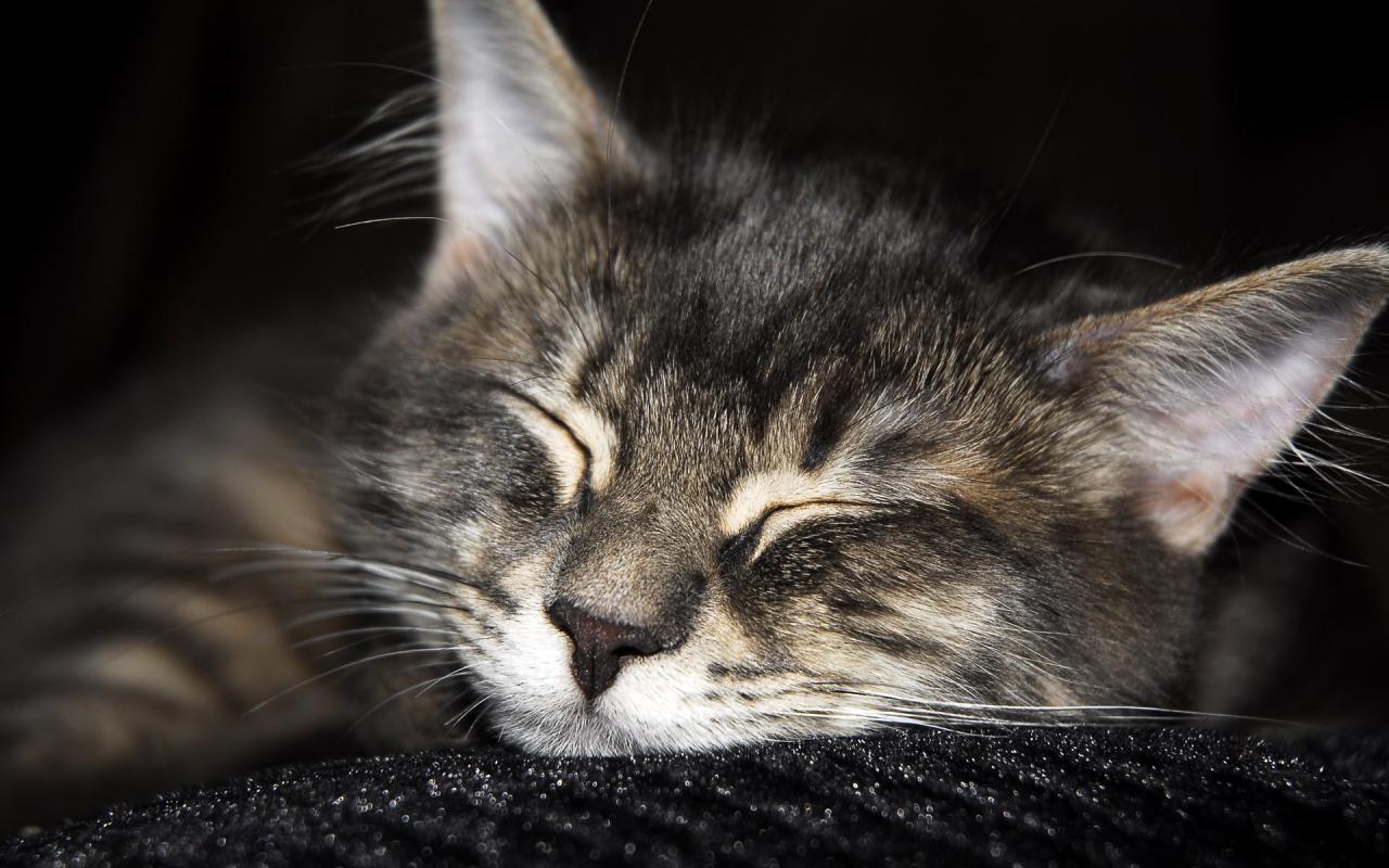 Название кошки размер 1280x800