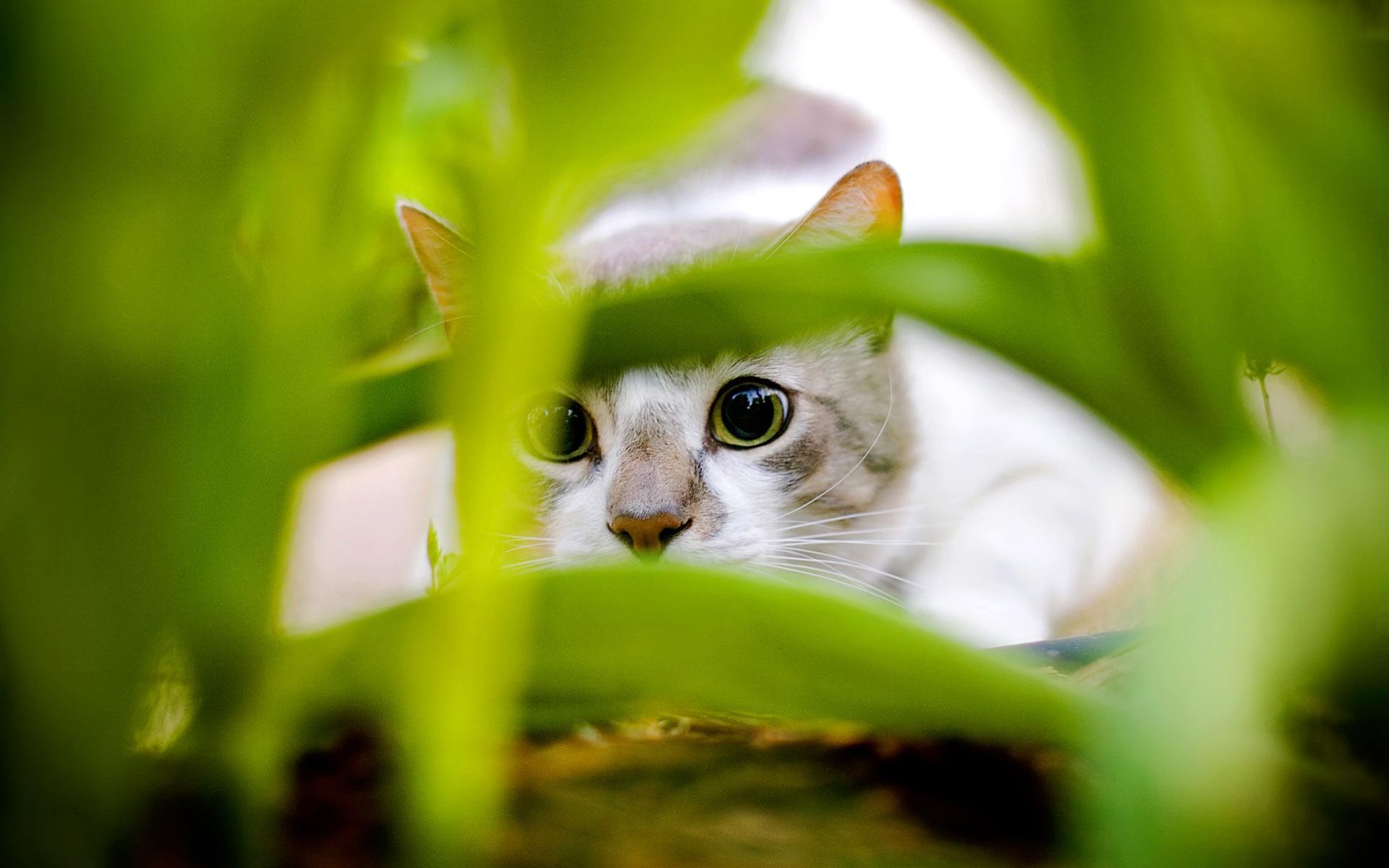 Картинки кошки currently 6 95 10 1 2 3 4 5 6 7