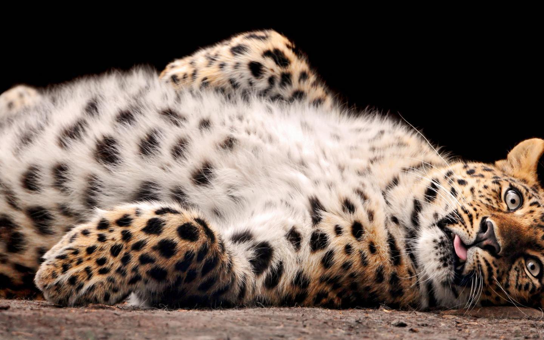 Название животные размер 1440x900