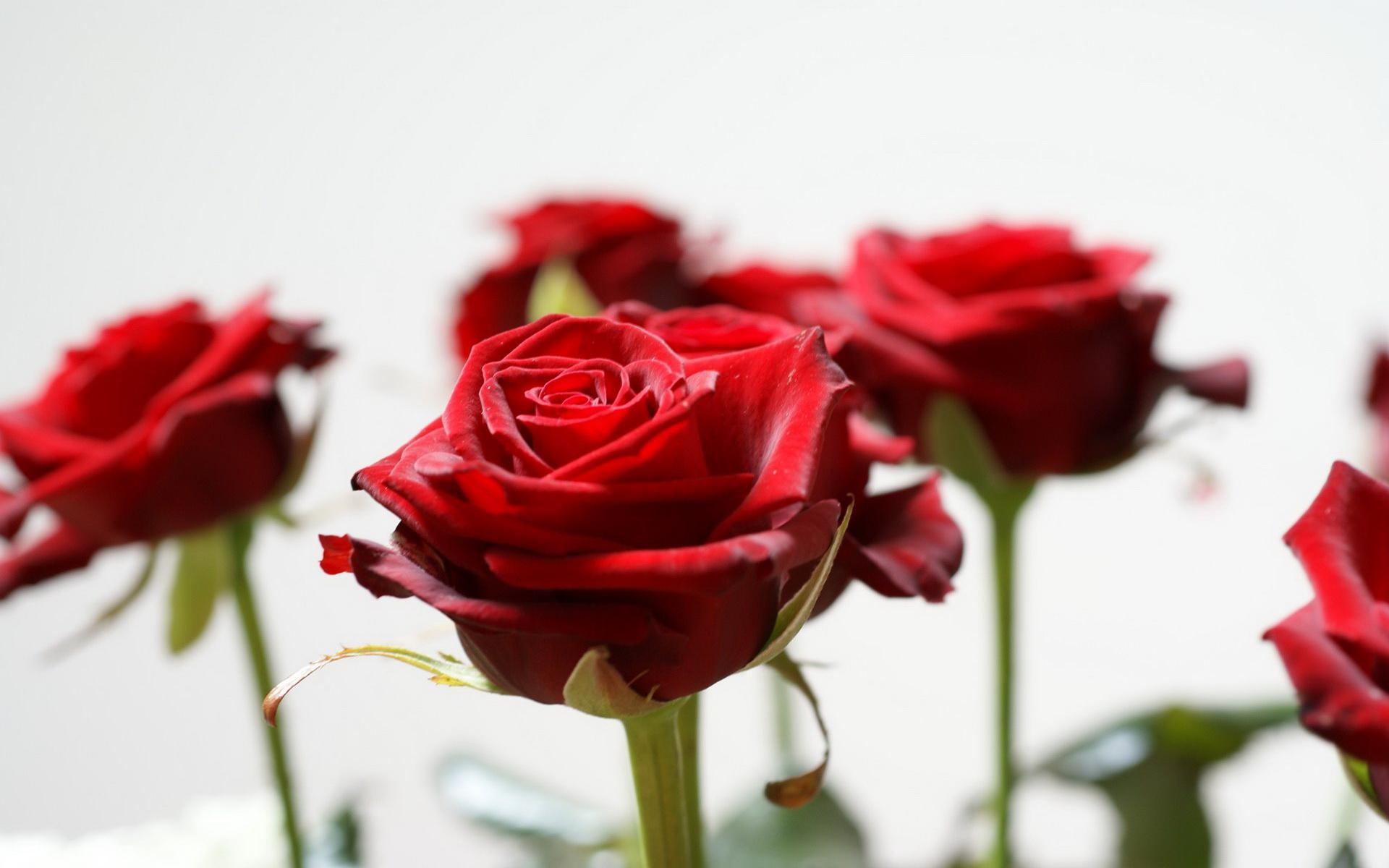 Рейтинг картинки розы
